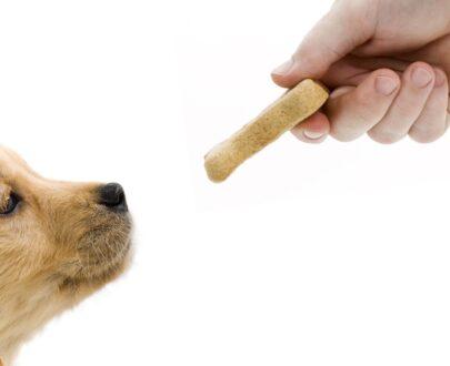 Snack per cuccioli