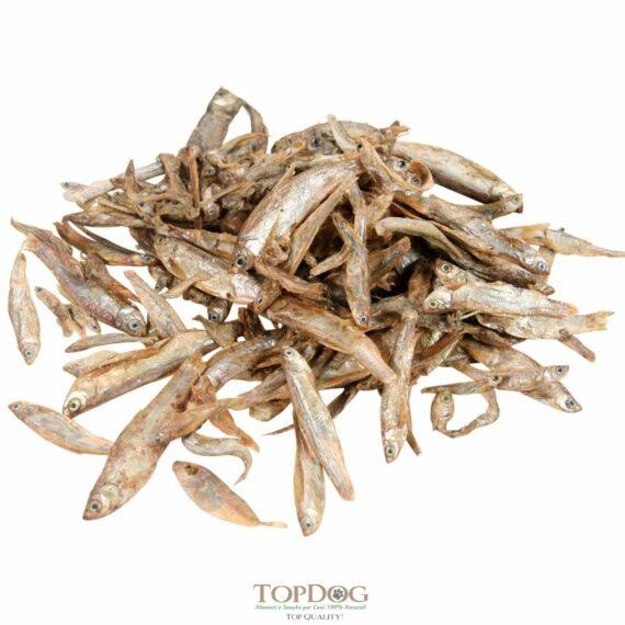 Pesciolini Coreani per Cani