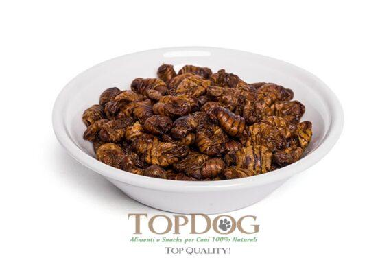 larve-insetto-per-cani