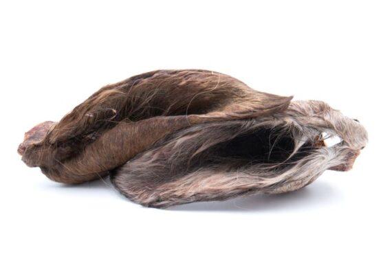 orecchie-di-cavallo-con-pelo-per-cani