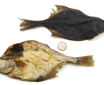 pesce essiccato per cani